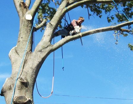 tree removal roxbury ct
